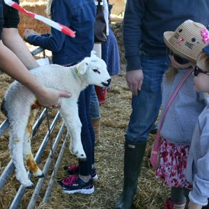 Lambing Weekend - April 2015, Lordsfield Swimming Club