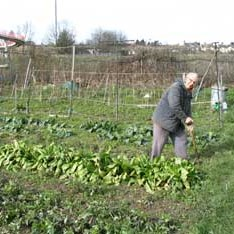 Image of Wainscott Allotment