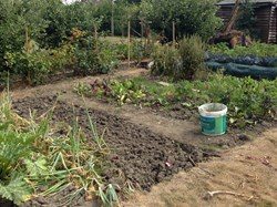 Rusthall Parish Council Allotments