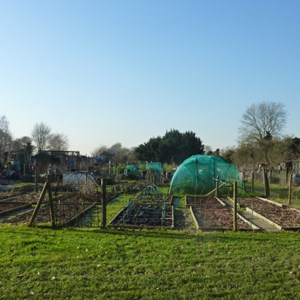 View across some of the allotments