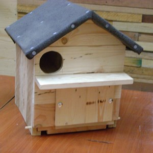 Little Owl Box