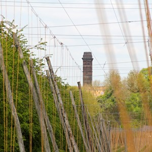 Hop Garden towards Chimney