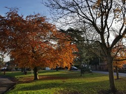 Up Hatherley Parish Council Parks and Green Spaces
