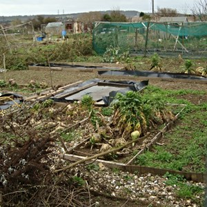 Cliffe Allotments