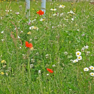 Roundabout wild flowers