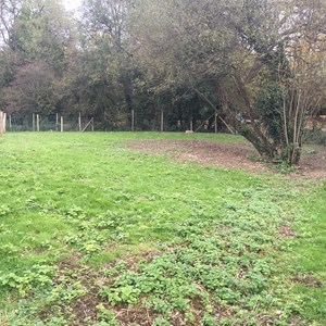 Fence removed from the Open Space next to the Watercress Beds, October 2017
