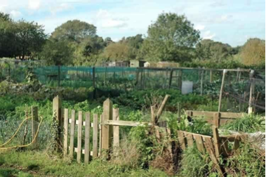Leeds Parish Council Allotments