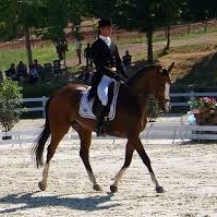 Dressage at Park Farm Show