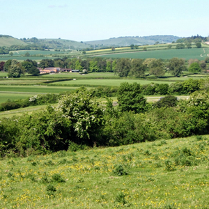 Kingsclere Countryside