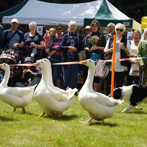 Droxford Village Community Country Fair