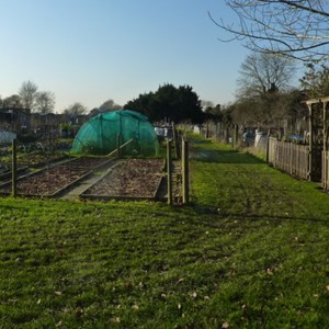 Some more well kept allotments