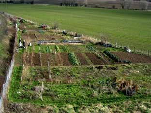 Image of Wainscott allotments