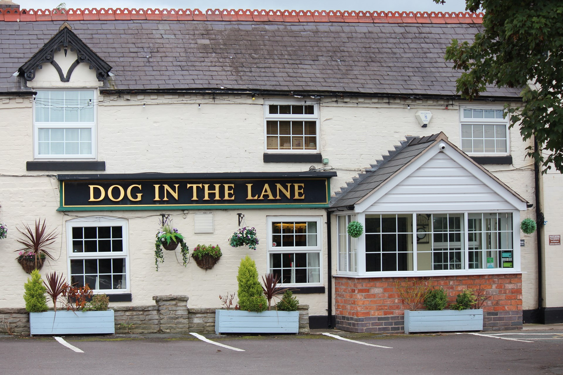 The Dog in the Lane