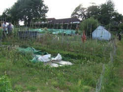 Allotments, Battle Town Council