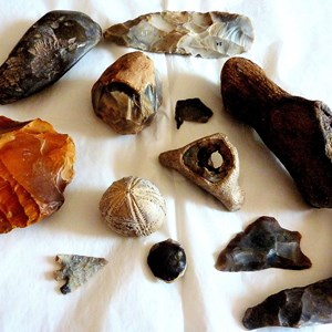 Flints and Fossils