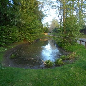 Rectory Road pond