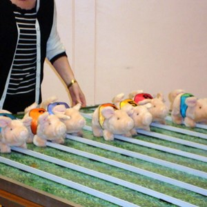 Colden Common Bowls Club Pig Race Night