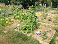 A photo of an allotment plot