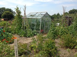 Photo of an allotment plot