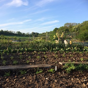 West Meon Parish Council Allotments
