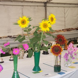 Flowers at Haseley Show