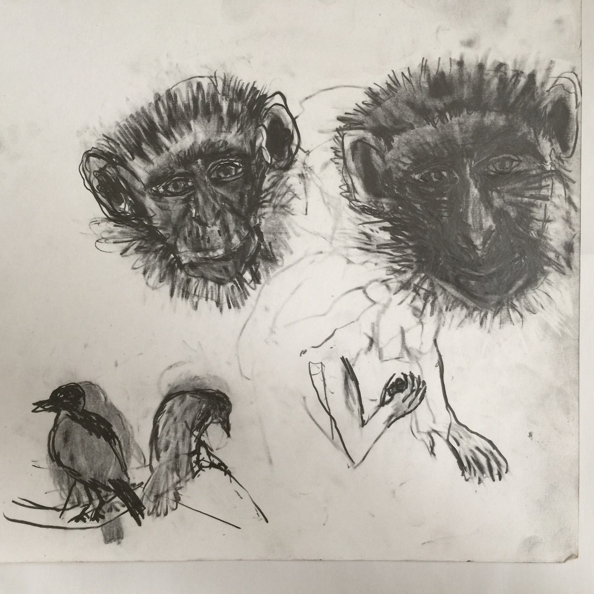 Study of monkeys faces with two birds 30cm x