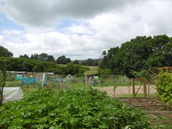 Battle Town Council Allotments