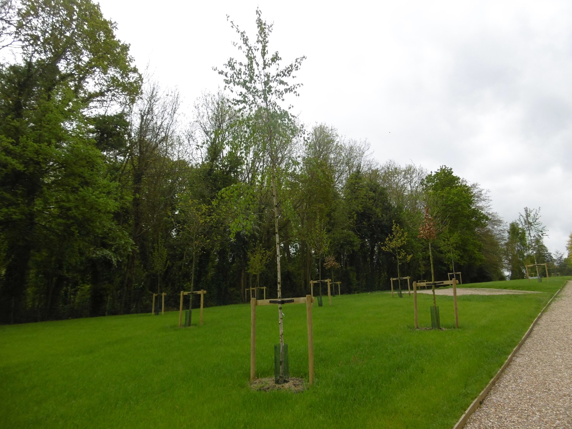 Ashes plots in the Natural Burial Area will be arranged around the trees