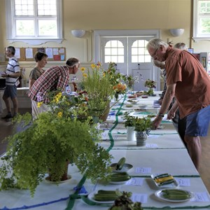 Mickleham and Westhumble Horticultural Society July 2019 show pictures