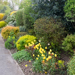 A huge variety of greens and yellows in the borders.