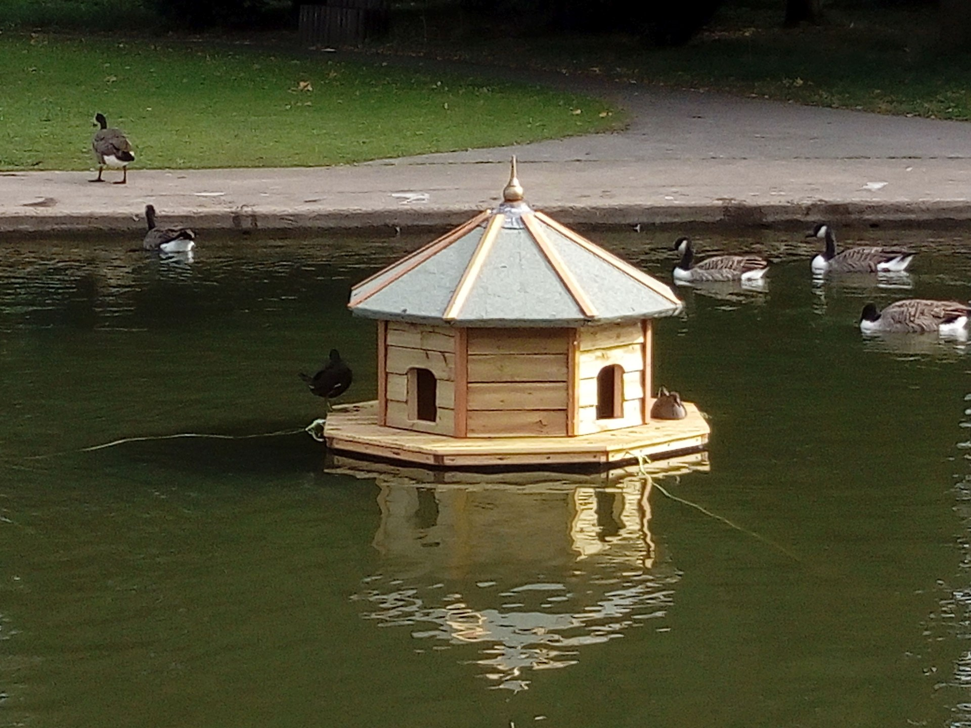 The Duck House with ducks!