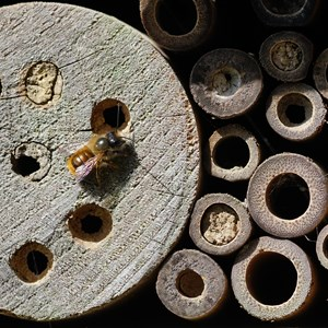 Bee Hotel - Terry Waldron