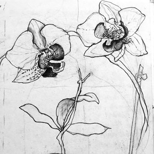 Orchids in detail.  Drawn design for gilded glass.