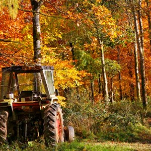 A Tractor surrounded by Autumn Leaves