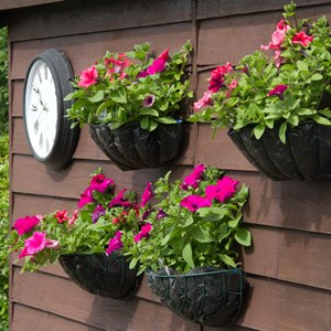 Petunias adorning the Club shed