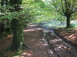 An ancient track near Triscombe Stoneocmbe
