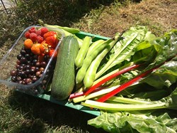 Produce grown earlier this year at the community allotment
