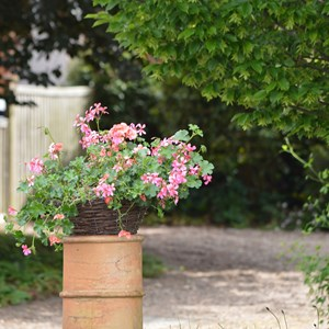 Bleasby Community Website Bleasby In Bloom & Open Gardens 2019