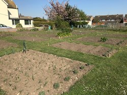 Lower Halstow Parish Council Allotments
