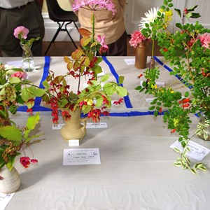 Mickleham and Westhumble Horticultural Society September 2014 show pictures
