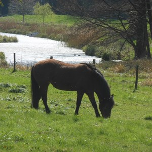 Grazing by the Meon