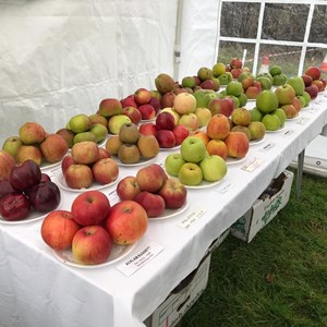 Bleasby Community Website Bleasby Apple Fest 2019
