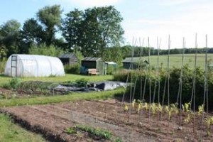 Yoxford Allotments
