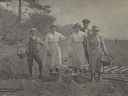 Members of the Liley family working in the fields