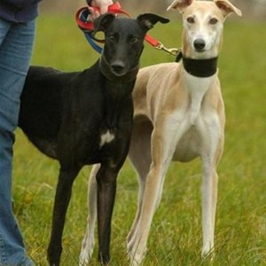 Mission Statement, Greyhound Rescue West of England