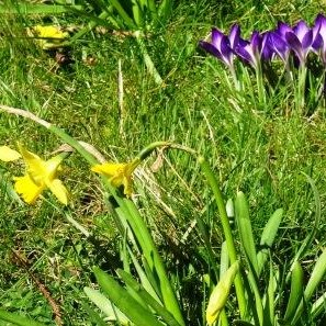 Spring flowers in the churchyard