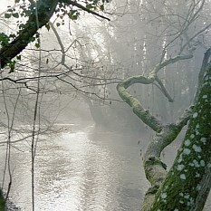 River Test in mist at Flashetts