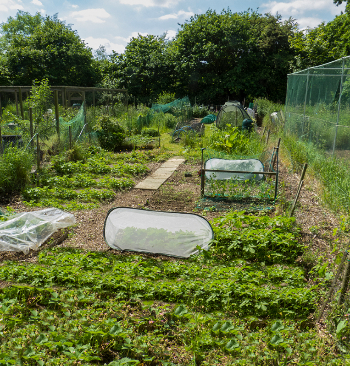 Hamble Parish Council Get an Allotment