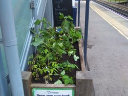 One of the edible planters at Winchester Railway station