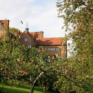 Apple Trees in Westerham